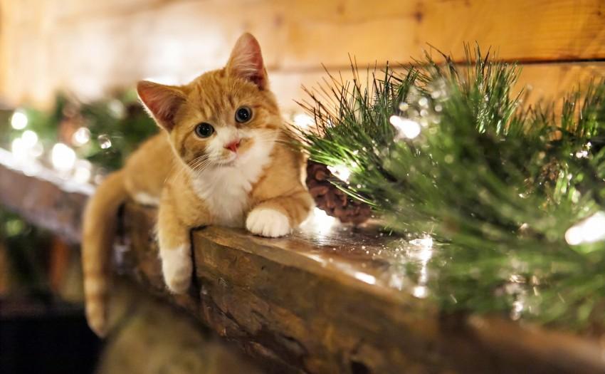 Macskarácsony videó